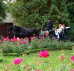 V parku (2008)