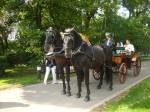 Svatba Loučeň - anglická ústroj a postroj