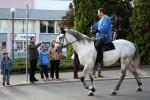 Královský kůň, Svatováclavská jízda (2012)