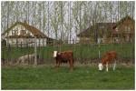Malí býčci (4/2013)